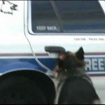 Dog vs Police Patrol Car